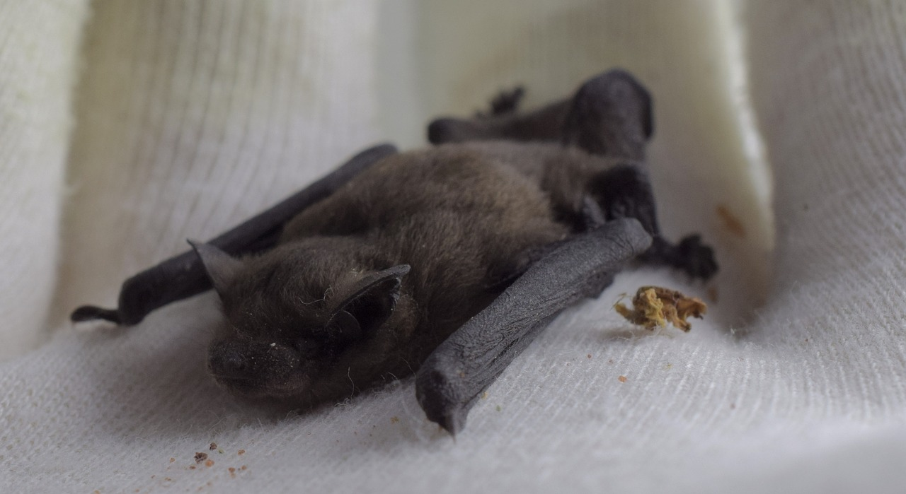 Hainault Forest Country Park bat conservation cash